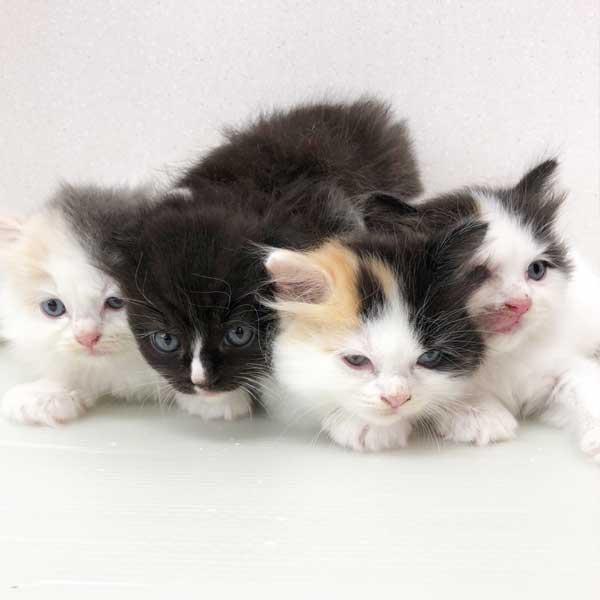 MIXの仔猫が誕生しました。