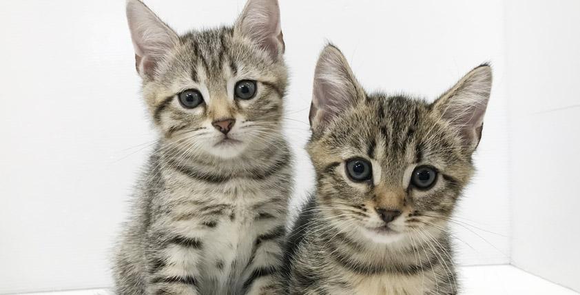 ベンガルの仔猫!2021.7.10生れの仔猫が誕生しました