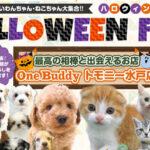 【今月のチラシ】OneBuddyトモニー水戸店 - ONE DO GROUP