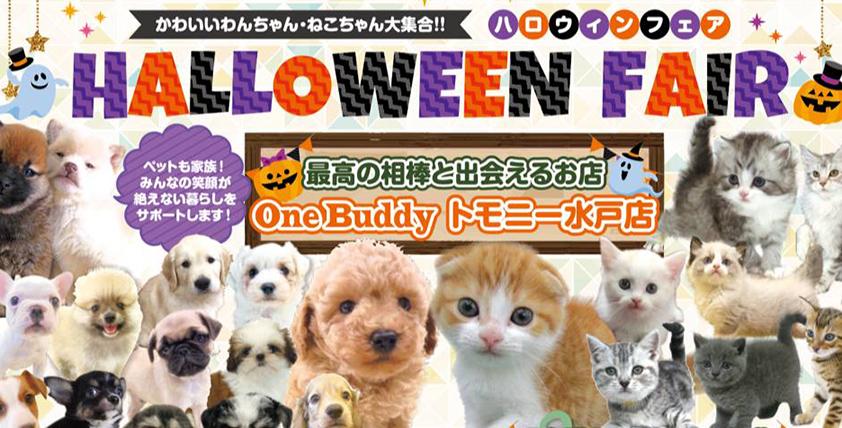 【今月のチラシ】OneBuddyトモニー水戸店