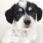 本日のおすすめ(MIX犬)OneBuddyトモニー水戸店 - ONE DO GROUP